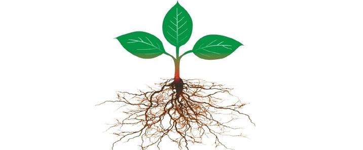 植物根系ps素材-三唑类杀菌剂大全及其优缺点